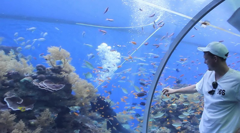 Underwater Observatory and Aquarium In Eilat_08
